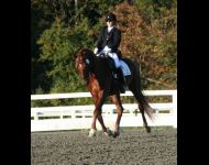 Laurie & Decorus - NJ Horse Park