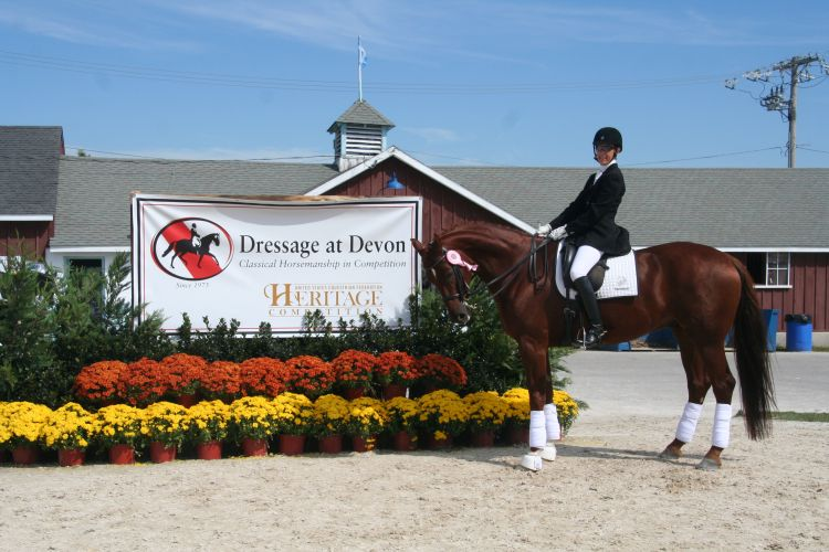 Dressage At Devon 2014: Decorus  Fourth Level 5th place